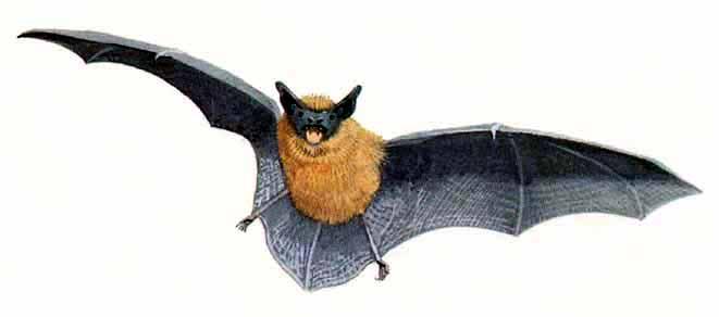 bats in the park friends of parc cefn onn